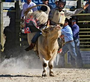 Bull Riding © Marc Bainaud