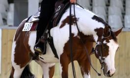 Le Pin (77) – 17 & 18 octobre 2014  - Finales championnat de France Paint Horse