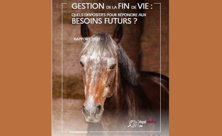 Votre cheval prend de l'âge, ce qu'il faut savoir