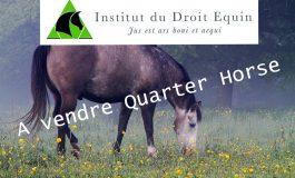 Vendre un cheval : tout ce qu'il faut savoir