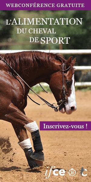 IFCE-cheval-sport-12-nov