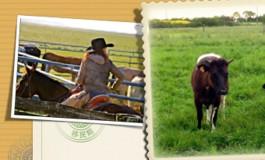 Les tout prochains RV du Arnaud Ranch au Petit Auverné (44)