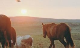 L'histoire du cowboy qui sauva les mustangs