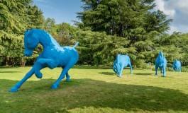 A Hennebont (56) le cheval en voit de toutes les couleurs !