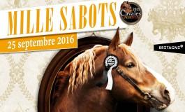 Cavaliers bretons, Lamballe (Côtes d'Armor) vous attend !