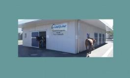 Santé équine : prise en charge optimale en région lyonnaise
