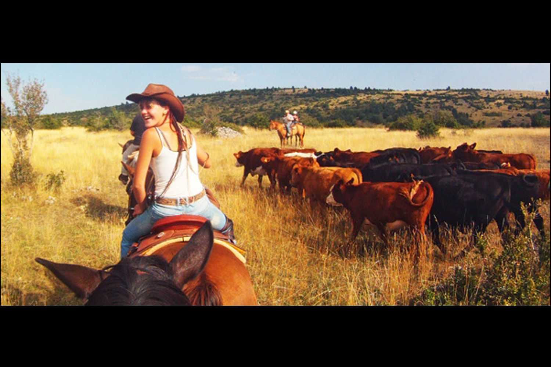 les bons plans de randals bison de la terrine de bison au whisky