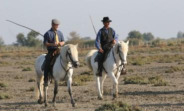 Le cheval Camargue fait salon du 17 au 19 février 2017 sur ses terres
