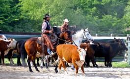 Versatile Ranch Horse à Acigné (35) les 27/28 mai 2017, les photos...