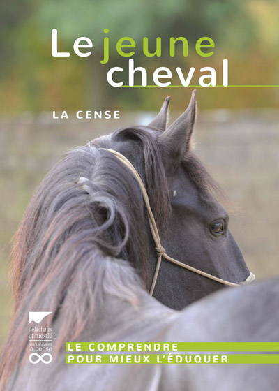 Jeune-cheval-La-Cense-in