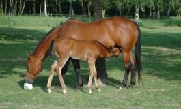 Une journée pour tout savoir sur le jeune cheval à La Cense