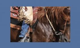 Participez à une enquête sur les pratiques équestres…