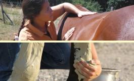 Dans le Tarn, Fiséki remet les chevaux en grande forme !