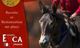Extreme Cowboy Race en Bretagne, juste en face de l'Amérique !