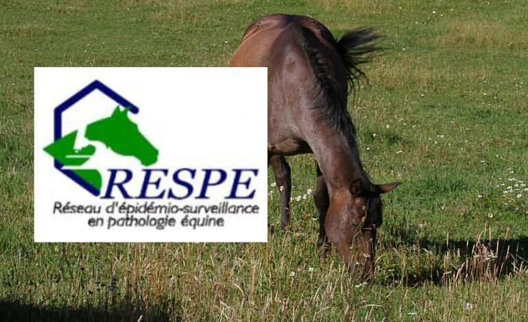 Herpèsviroses et rassemblements équestres : ce qu'il faut savoir