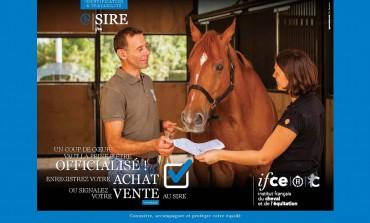 Acheter son cheval… officiellement !