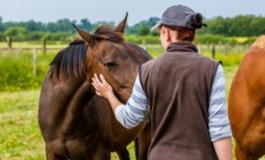 Garder le contrôle sur la fin de vie de votre cheval