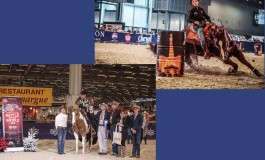 Salon Cheval de Paris 2018 - Master All Breed & Championnat BBR