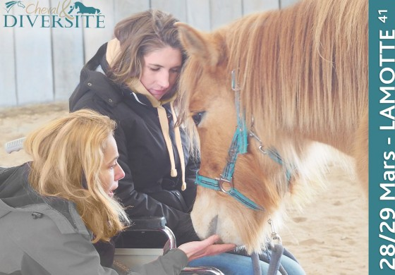 Le cheval partenaire de santé, de la prévention à la reconstruction