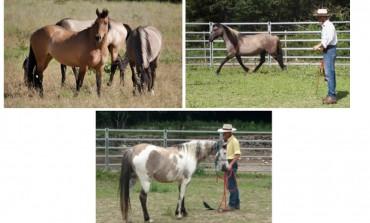 Natural horsemanship : stage dans le Var les 18 et 19 mai 2019 avec Robert Trösch