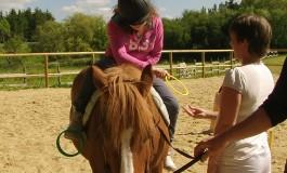 Médiation équine, achat d'un premier cheval ou soin et dopage… des infos pour y voir clair