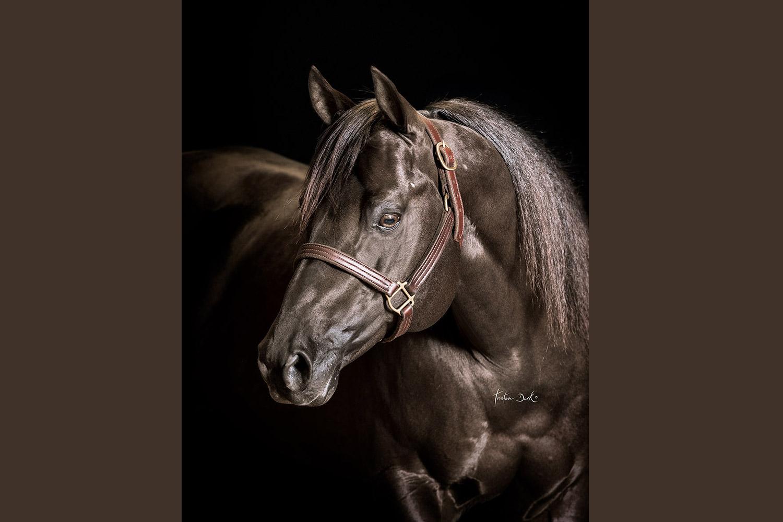 Best Spook © Courtesy Tristan Dark Horses
