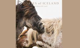 Chevaux d'Islande chez eux…