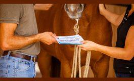 Gérer facilement les papiers de votre cheval