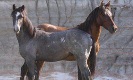 Tout ce que vous voulez savoir sur les chevaux sauvages
