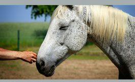 Accompagner le vieillissement avec le cheval