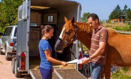 Achat/vente de chevaux : 30 minutes pour en savoir plus