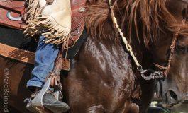 Quid de la pratique de l'équitation après le 2 juin 2020 ?