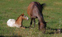 Savoir vendre ses prestations dans l'univers du cheval