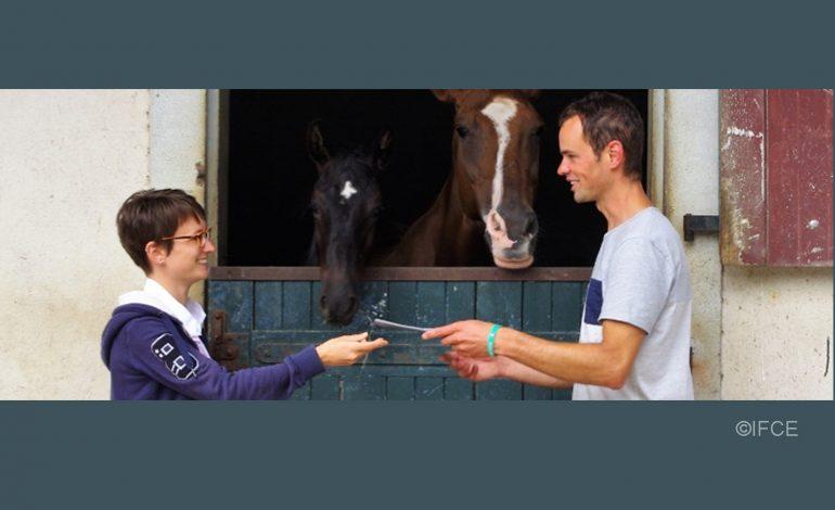 Acheter ou vendre un cheval : ce qu'il faut savoir