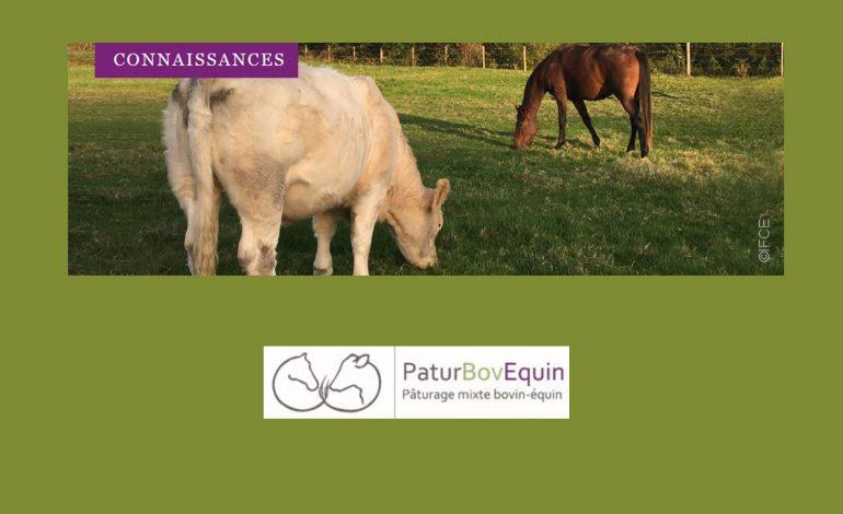 Equins et bovins, duo gagnant dans la pâture