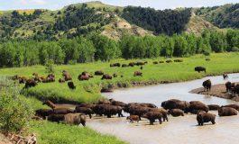 Parcs nationaux US : préparez vos futures visites