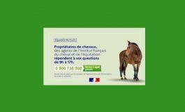 Actes de cruauté envers les chevaux : mise en place d'un numéro vert