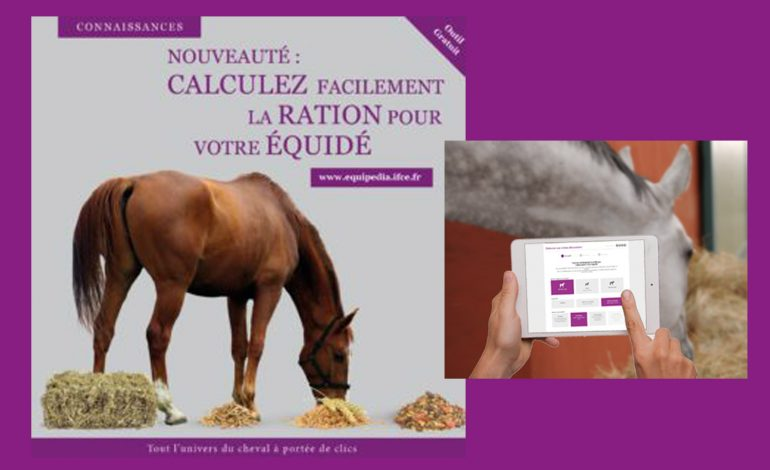 Quelle ration pour mon cheval ?