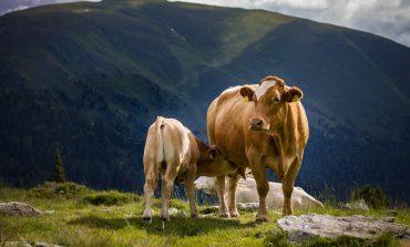 Fausse viande et fin de l'élevage: les masques tombent !