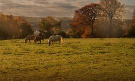 Mutilations de chevaux : que dit le droit équin ?