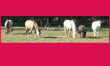 Au sujet du cheval, un blog à part ?