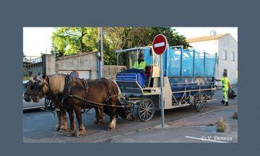 Humains et chevaux, une très longue histoire mais jusqu'à quand ?