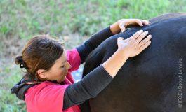 Zoom sur la pratique de l'ostéopathie animale