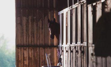 Nouvelle aide d'urgence pour les centres équestres : 60 euros par équidé
