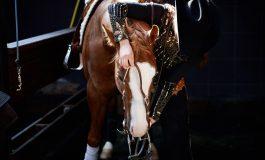 Derby et Maturity de Reining à Bo Ranch : le rendez-vous de l'excellence