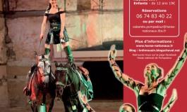 Un paint horse au Cabaret équestre de Pompadour (19) cet été 2013