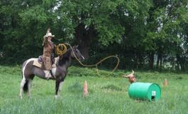 Contigné (49) – 25/26 avril 2015 - Première manche Versatile Ranch Horse de la RHA