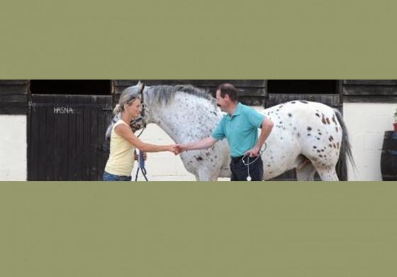 Vous détenez 3 chevaux ou plus, alors la  déclaration de véto est obligatoire !