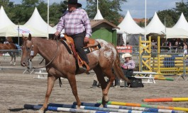 Championnat d'Europe Appaloosa 2013