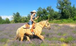 Le tour de France à cheval d'Aurélie, c'est parti
